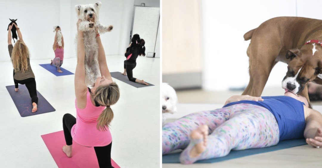 Discover the Benefits of Doga: Yoga with Your Dog