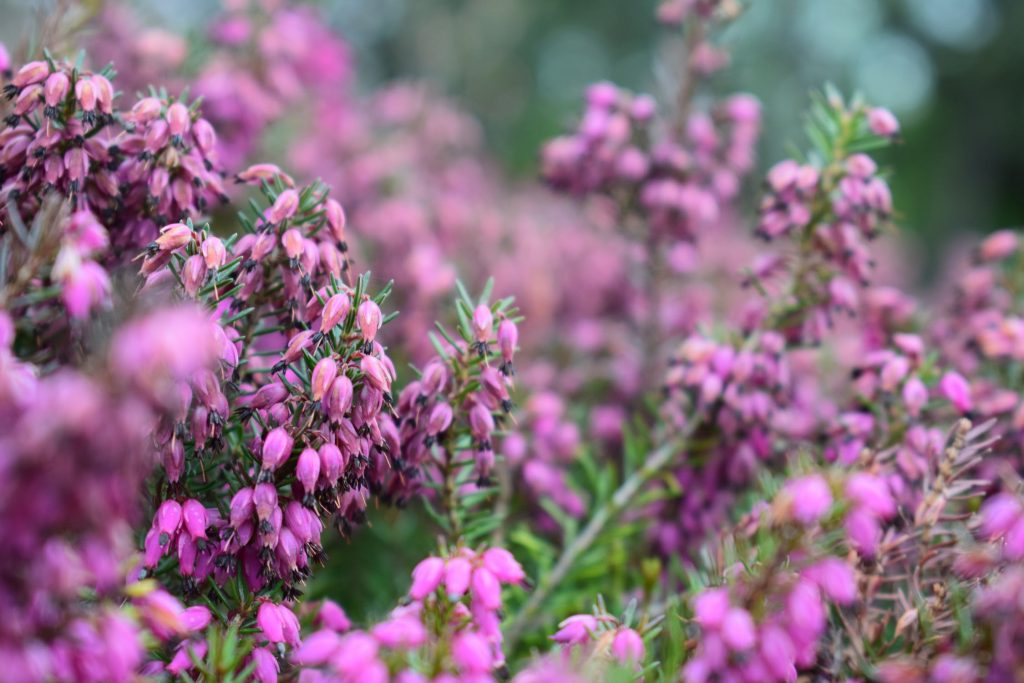 Bloom Your Garden with These 5 Best Plans for Autumn