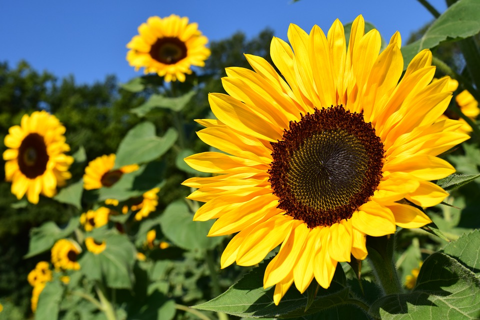 Six Plants Hay Fever Victims Should Avoid