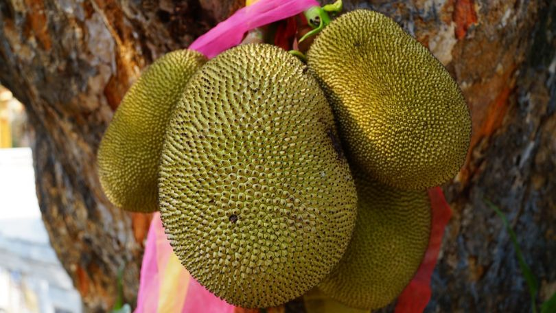 worlds-top-ten-smelliest-foods-10-durian