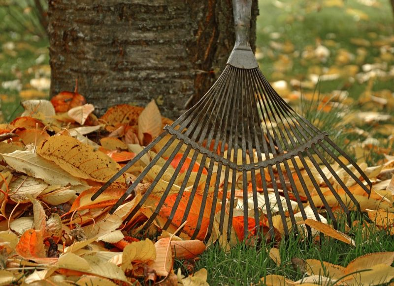 5-ways-sneak-in-a-workout-fall-activities-2-raking-burning